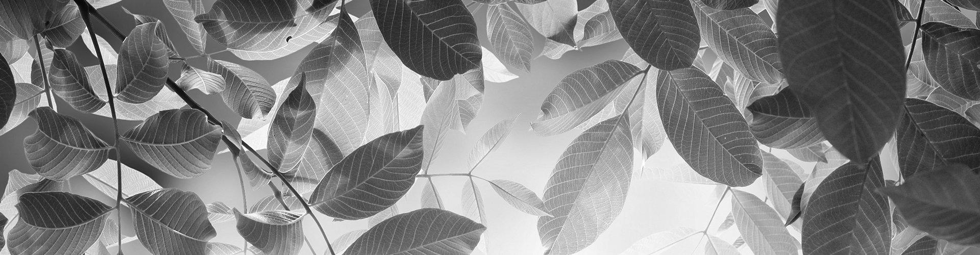 Us Leaf
